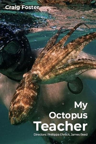 ดูหนังออนไลน์ฟรี My Octopus Teacher (2020) บทเรียนจากปลาหมึก